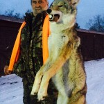 Montana trophy coyote hunts