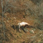 Montana trophy elk hunts