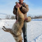 Montana trophy coyote hunts