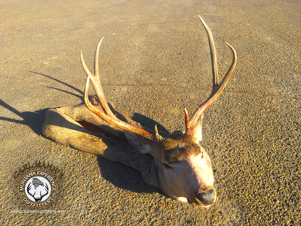 a personal experience of hunting a deer Wilderness whitetails offers the ultimate whitetail hunting experience  blinds  that will allow you to get up close and personal with your future trophy buck.